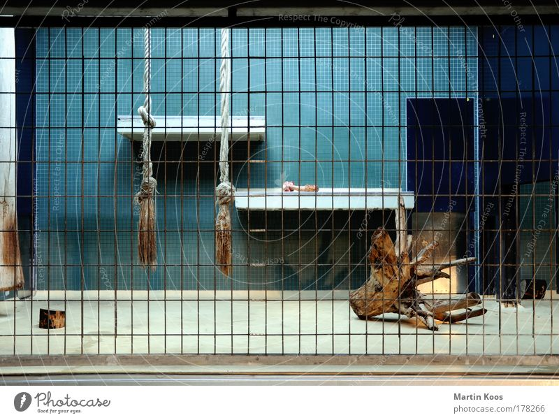 löwenanteil blau Käfig Seil Fliesen u. Kacheln Baumstumpf Gitter leer Zoo gefangen Innenaufnahme Menschenleer Kunstlicht