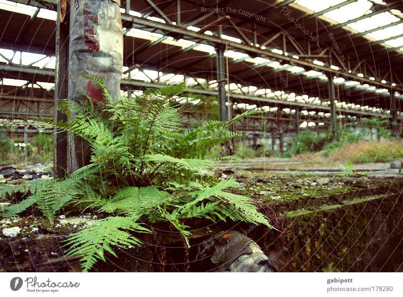 UrbanFarn Farbfoto Innenaufnahme Nahaufnahme Menschenleer Tag Weitwinkel Pflanze Farnblatt Industrieanlage Bauwerk Gebäude Halle Lagerhalle gehen Ruine