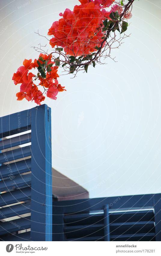 Fenster zum Süden blau weiß rot Ferien & Urlaub & Reisen Pflanze Sommer Blatt Haus Erholung Holz Wärme Garten Blüte Gebäude Tür
