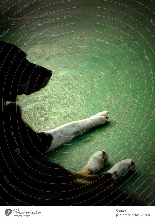 Hund Tier Säugetier Kopf Beine Fell liegen Blech Metall Bodenbelag grün lackiert Strukturen & Formen Erholung ruhen Pause schwarz weiß Hochformat