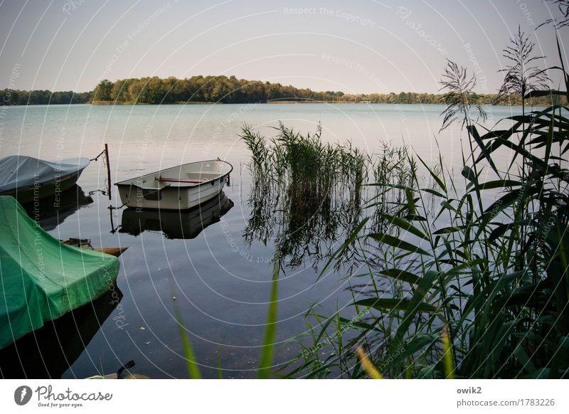 Nußschale Umwelt Natur Landschaft Pflanze Wasser Wolkenloser Himmel Horizont Sommer Klima Schönes Wetter Gras Sträucher Röhricht Wald Seeufer Olba Lausitz