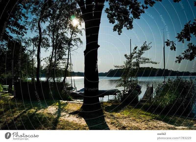Stegreif Umwelt Natur Landschaft Pflanze Wasser Wolkenloser Himmel Horizont Sommer Klima Schönes Wetter Baum Sträucher Baumstamm Wald Seeufer Olba Lausitz