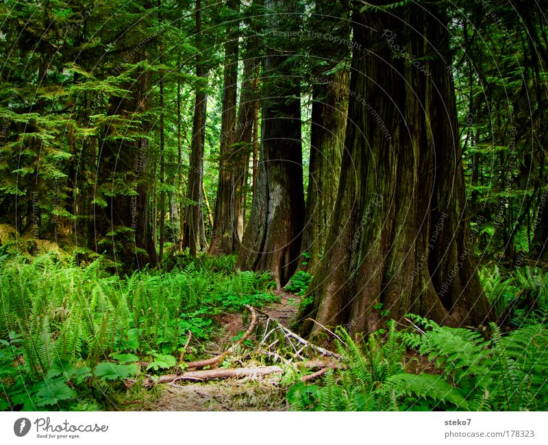 verwurzelt Natur alt Baum grün ruhig Einsamkeit Wald Erholung Holz Landschaft Zufriedenheit Kraft Umwelt groß Idylle Nordamerika