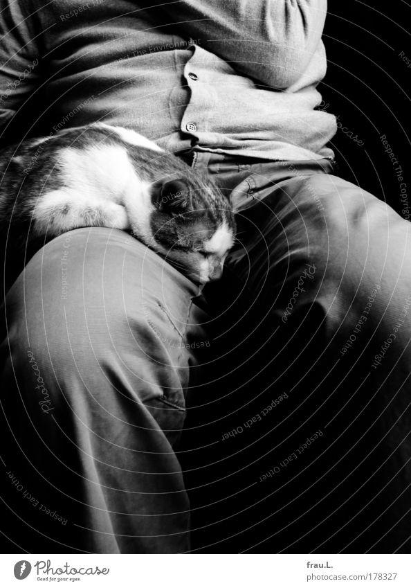 Double Innenaufnahme Tag Starke Tiefenschärfe Mensch Männlicher Senior Mann Bauch Beine 1 Hose Jacke Katze Tier schlafen sitzen träumen Zusammensein