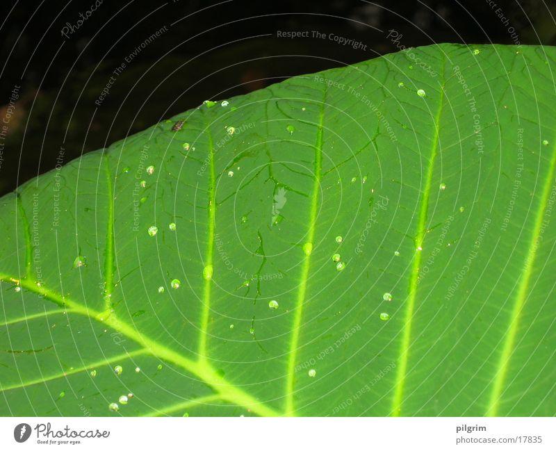 Blatt grün Urwald