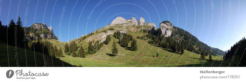 Gämsblick Natur Baum grün blau Sommer Ferien & Urlaub & Reisen Gras Berge u. Gebirge Landschaft braun groß Ausflug Tourismus Schweiz Kanton Appenzell Alpen