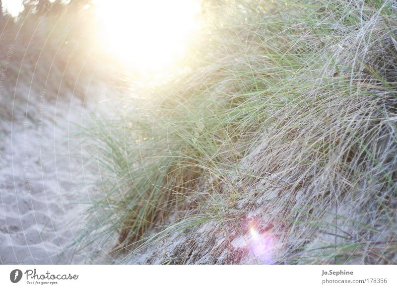 le féerique soleil du nord Natur Sonnenaufgang Sonnenuntergang Sommer Gras Strand leuchten hell Wärme Erholung Stimmung Ferien & Urlaub & Reisen Wege & Pfade