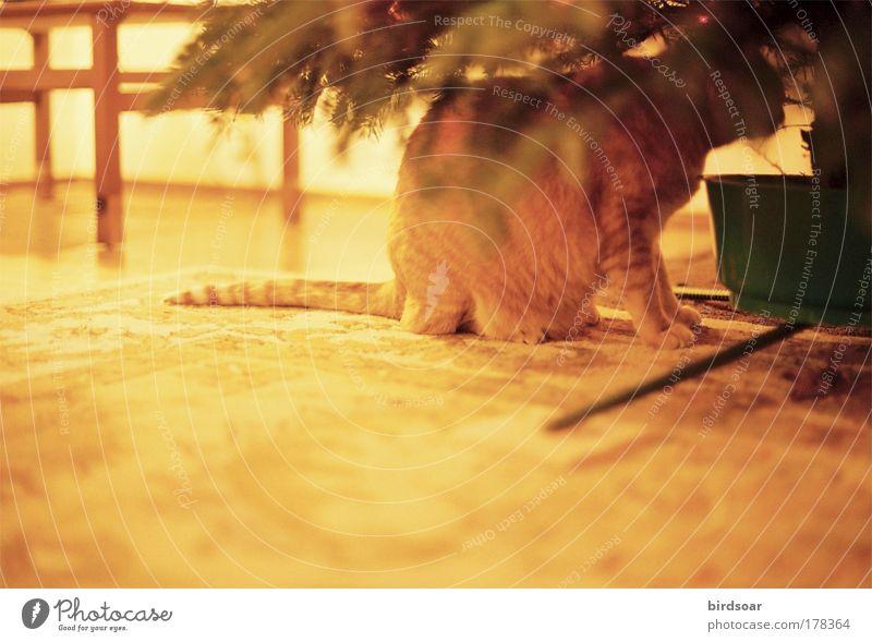 Es ist schon lange her. Farbfoto Innenaufnahme Menschenleer Abend Kontrast Zentralperspektive Tierporträt Haustier Katze 1 Geborgenheit Warmherzigkeit