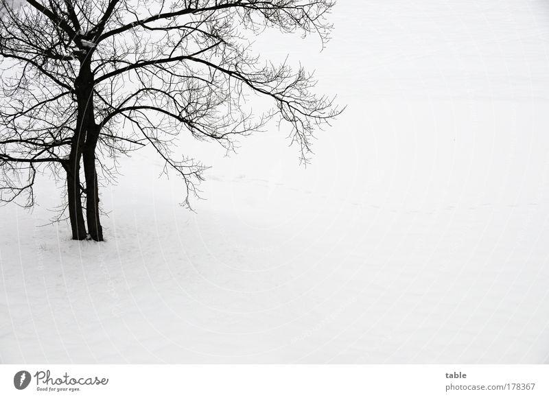 er kommt . . . Farbfoto Gedeckte Farben Textfreiraum rechts Textfreiraum unten Hintergrund neutral Vogelperspektive Winter Schnee Winterurlaub Umwelt Natur