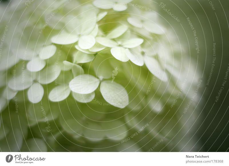 Schneeflocke Natur weiß schön Pflanze Sommer Blatt Tier Umwelt Landschaft Blüte träumen elegant ästhetisch authentisch Zukunft