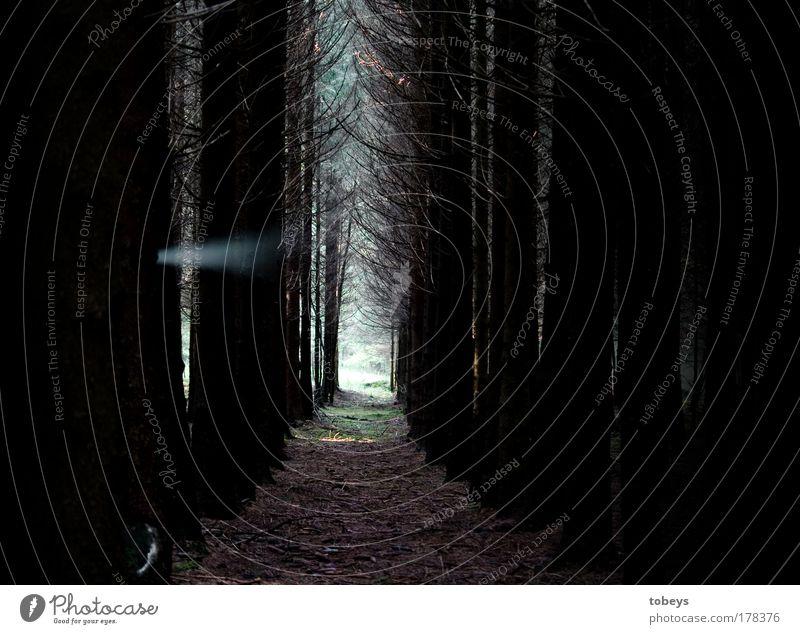 Paranormale Phänomene? Wald träumen gruselig kalt verrückt Überraschung Angst gefährlich entdecken Surrealismus Tod Geister u. Gespenster paranormal mystisch