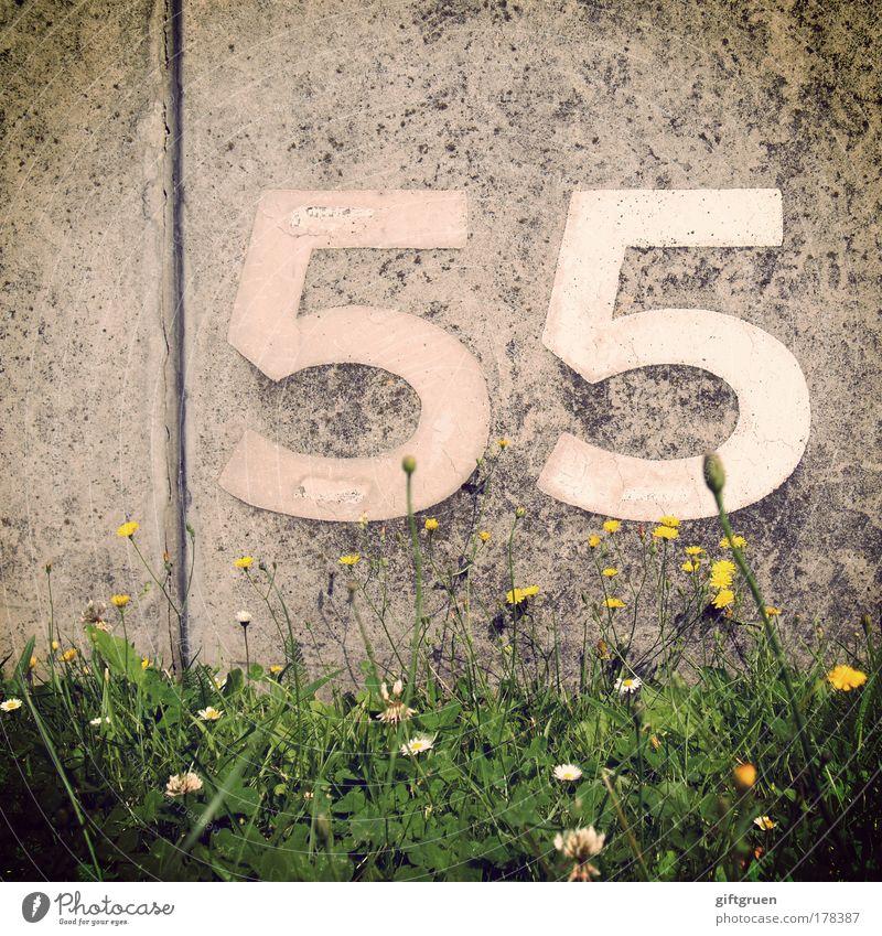 caesium Frühling Sommer Pflanze Blume Gras Blüte Mauer Wand Ordnung Orientierung Schilder & Markierungen 55 fünfundfünfzig Ziffern & Zahlen Zeichen Aufschrift