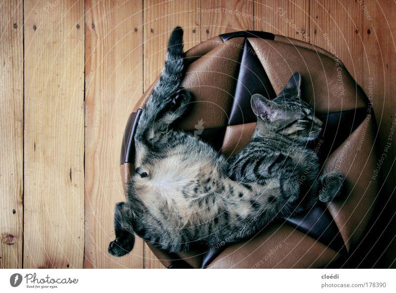 kiwi Farbfoto Innenaufnahme Textfreiraum links Tierporträt Ganzkörperaufnahme Profil geschlossene Augen maskulin Haare & Frisuren Haustier Katze Tiergesicht