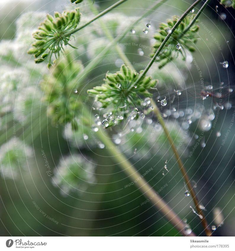 decorated with dewdrops Farbfoto Außenaufnahme Nahaufnahme Detailaufnahme Menschenleer Morgen Reflexion & Spiegelung Sonnenlicht Schwache Tiefenschärfe Natur