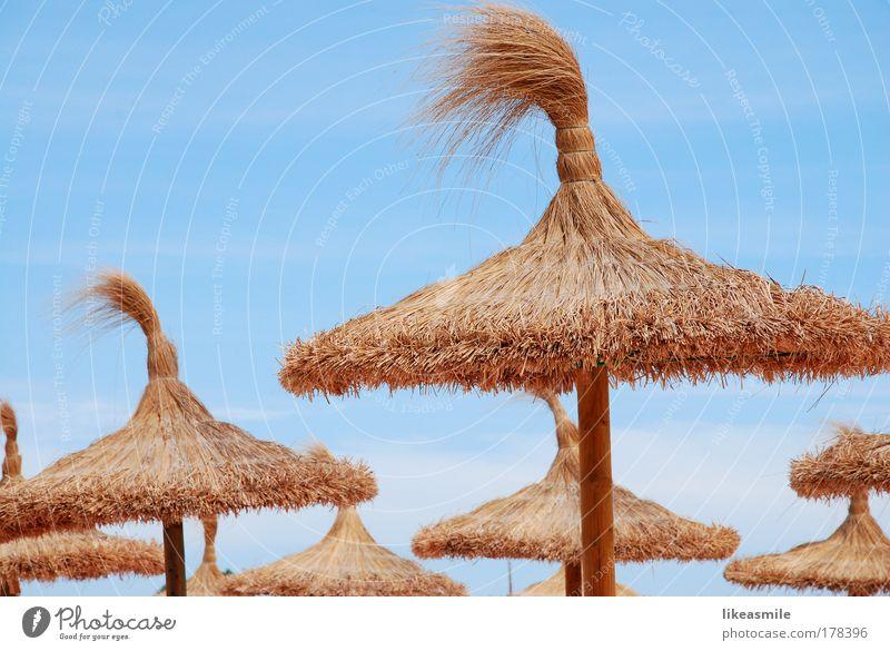 source of shade Sonne Sommer Strand Ferien & Urlaub & Reisen Ferne Erholung braun Tourismus Sonnenschirm Schirm exotisch Stroh Sommerurlaub