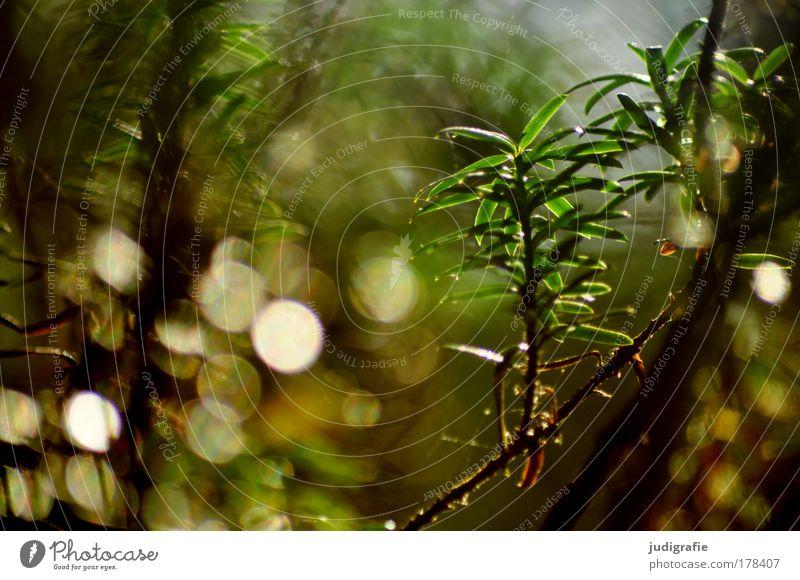 Wald Natur Baum grün Pflanze ruhig Umwelt Wachstum einzigartig natürlich leuchten Optimismus
