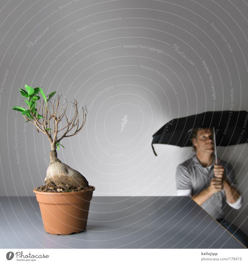 anti aging Mensch Natur Mann alt Baum Blatt Erwachsene Umwelt Tod Leben Wohnung sitzen Wachstum Häusliches Leben Schutz Regenschirm