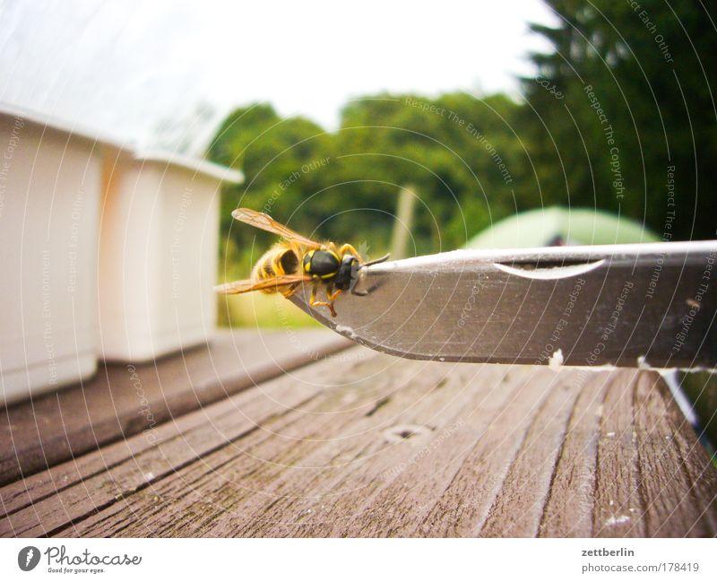 Wespe Holz Angst Tisch Biene Insekt Todesangst Camping Holzbrett Textfreiraum Messer Panik stechen Wespen Campingplatz Klinge