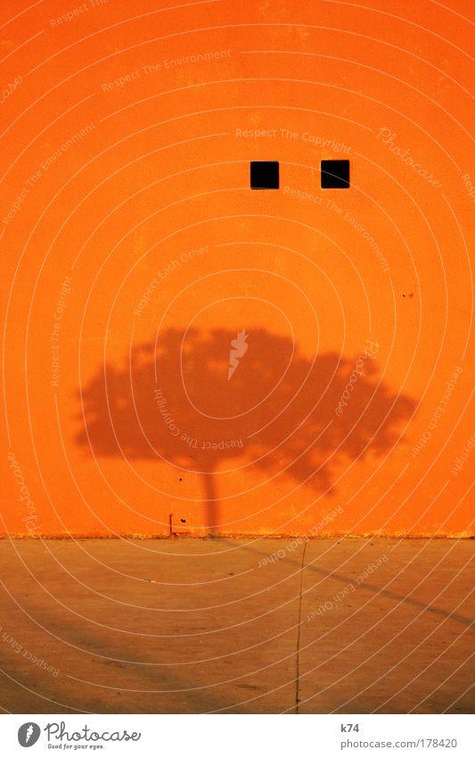 Schatten eines Baumes auf orangener Wand Natur ruhig Farbe Mauer Punkt leuchten