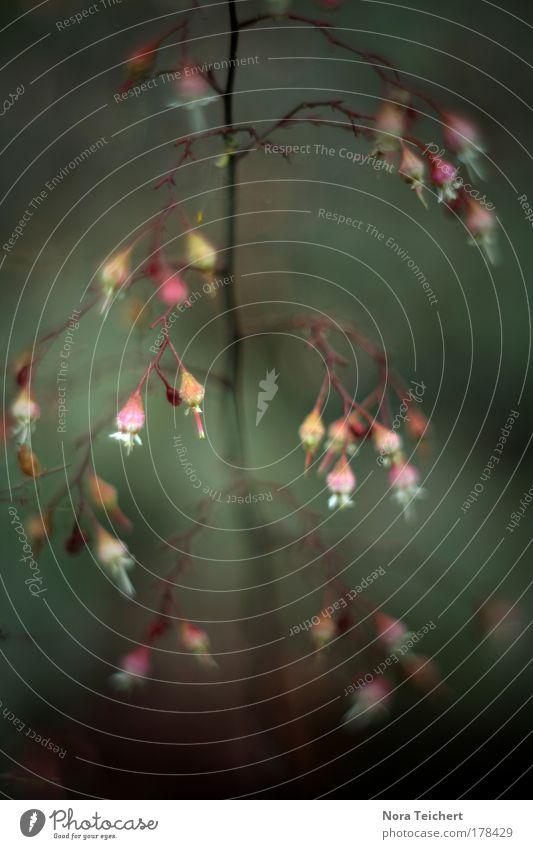 Ballett II Farbfoto Gedeckte Farben Außenaufnahme Nahaufnahme Detailaufnahme Makroaufnahme Experiment abstrakt Menschenleer Abend Schatten Unschärfe
