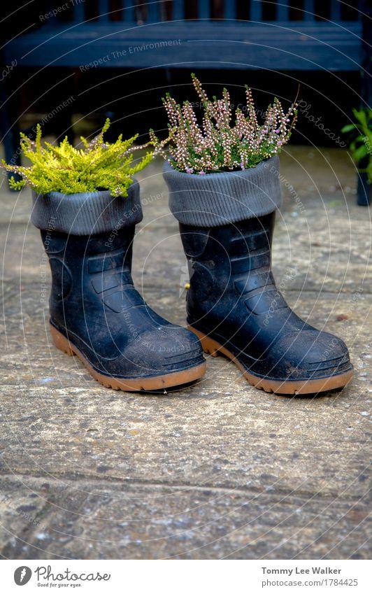 Kreativer Garten Lifestyle Gartenarbeit Natur Pflanze Blume Gras Blüte Platz Bekleidung Stiefel Gummistiefel Stein schwarz Gefühle Farbe Idee Kreativität Aktion