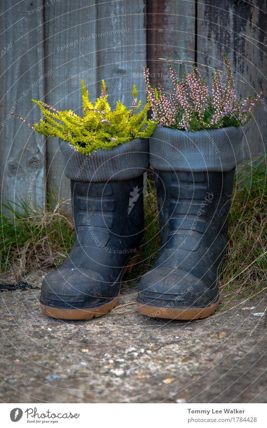 Kreative Gartentöpfe Lifestyle Gartenarbeit Natur Pflanze Blume Gras Blüte Platz Bekleidung Stiefel Gummistiefel Stein schwarz Gefühle Farbe Idee Kreativität