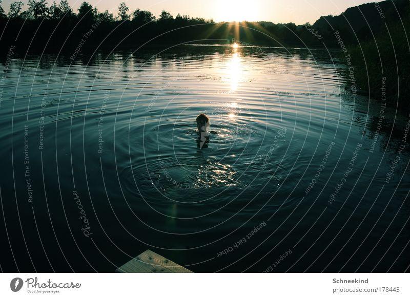 Die letzte Runde durch den See Mensch Natur Wasser blau Baum Sonne Sommer Einsamkeit ruhig Erholung Umwelt Freiheit Gras Kopf Glück See