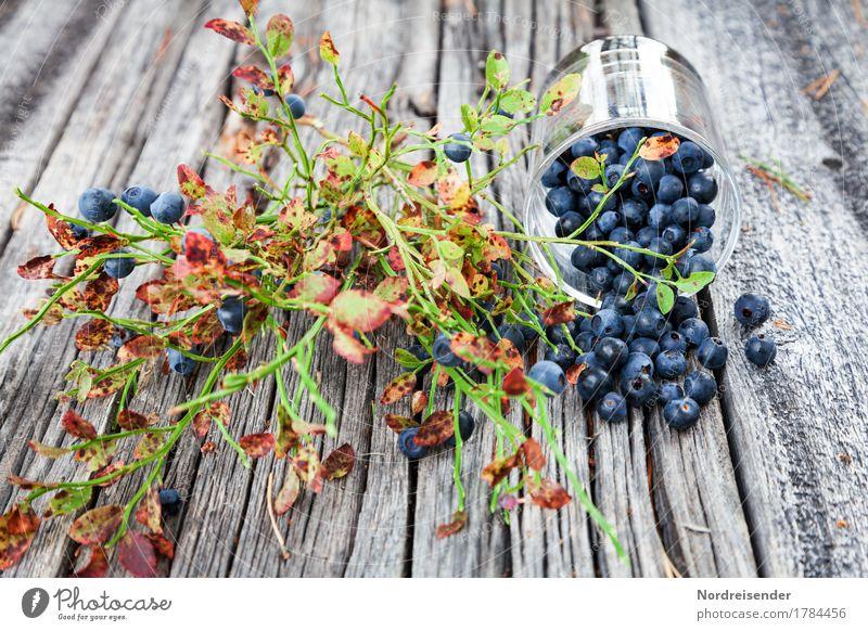 Blaubeerzeit Frucht Ernährung Picknick Bioprodukte Vegetarische Ernährung Fingerfood Glas Ausflug Tisch Sträucher Holz positiv Appetit & Hunger Freizeit & Hobby
