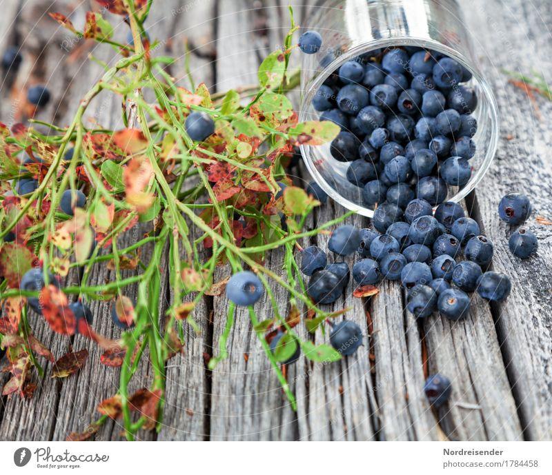Blaubeeren Lebensmittel Frucht Ernährung Bioprodukte Vegetarische Ernährung Glas Freizeit & Hobby Ausflug Natur Pflanze Wildpflanze Wald Holz Essen frisch