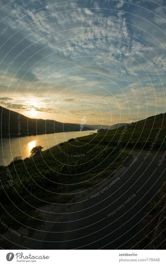 Der Rhein Himmel Wasser Sonne Ferien & Urlaub & Reisen Wolken Deutschland Fluss Wein Flussufer Weinberg Gewässer Weinlese Lamm Hessen Lesestoff