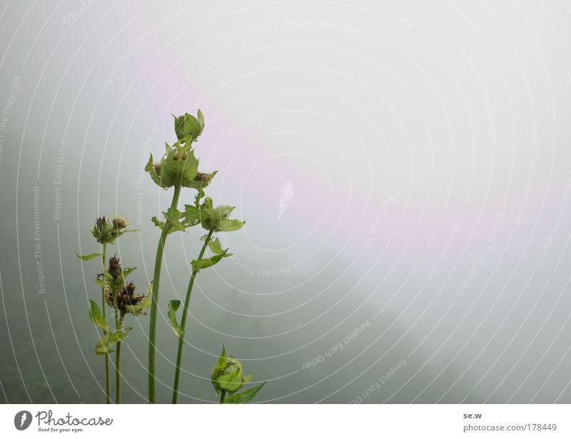 Nicht alles ist grau im Herbst! Natur grün Pflanze Wolken Blüte grau Nebel Alpen Berge u. Gebirge Wildpflanze