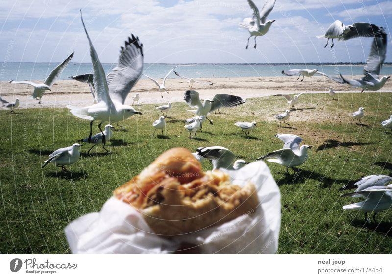 Burger with the lot -2- Meer Ferien & Urlaub & Reisen Erholung Freiheit Zusammensein Vogel Küste planen Essen fliegen Neugier Ernährung Konflikt & Streit