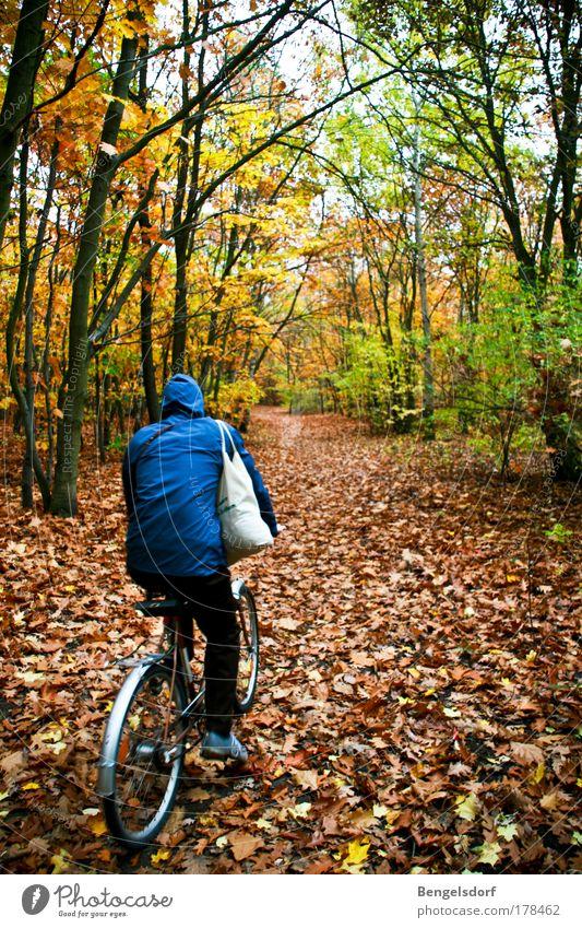 Blaukäppchen Freizeit & Hobby Ferien & Urlaub & Reisen Tourismus Ausflug Fahrradtour Mensch 1 Natur Erde Herbst Schönes Wetter Wald Baum Baumstamm Baumkrone
