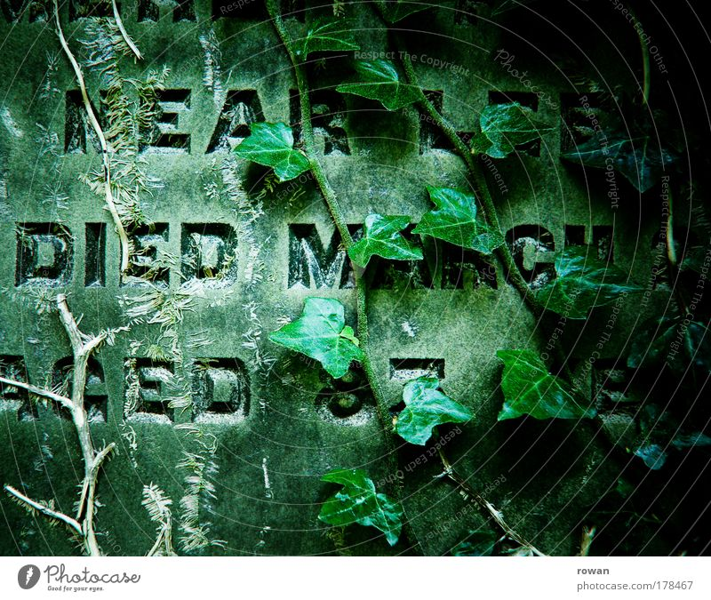 RIP alt Pflanze dunkel kalt Tod Friedhof Stein Traurigkeit Religion & Glaube Trauer Wachstum Ende bedrohlich Vergänglichkeit Sehnsucht gruselig