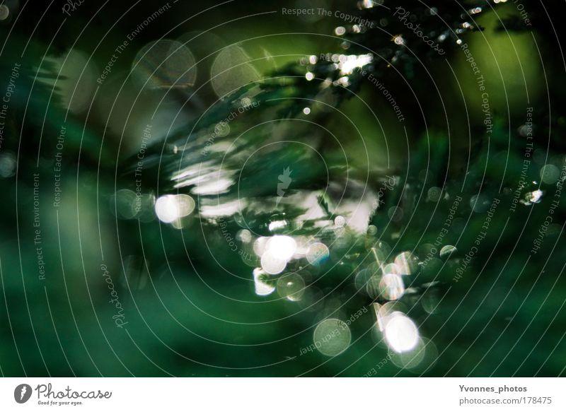 Glitzer in Grün Natur grün schön Baum Pflanze Umwelt Landschaft Park glänzend leuchten Vergänglichkeit abstrakt Tanne Detailaufnahme Farbe Gegenlicht