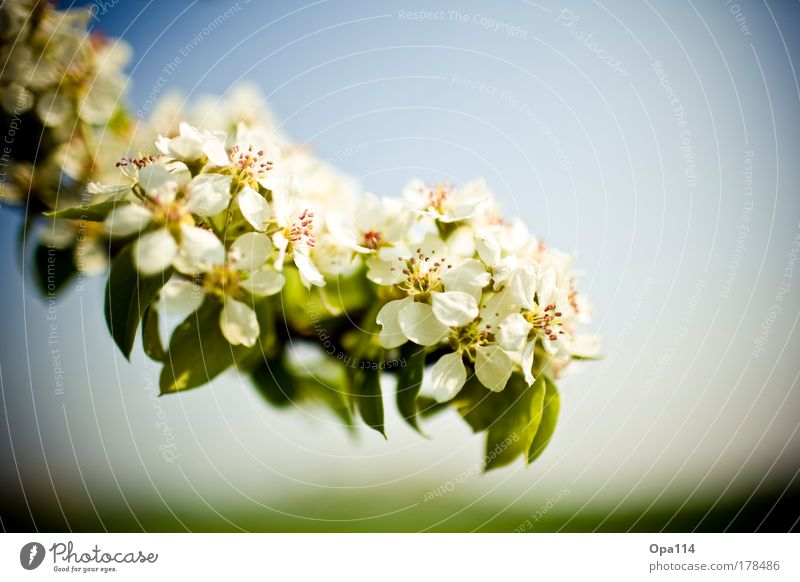 so rein und unschuldig Himmel weiß Blume grün blau Pflanze Sommer ruhig gelb Erholung Blüte Frühling Wärme Zufriedenheit Umwelt gold