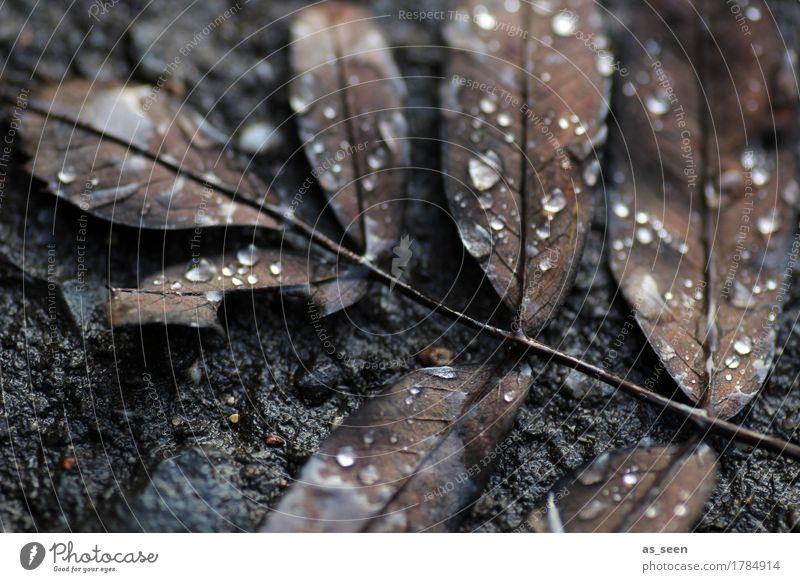 In the dark Design Halloween Trauerfeier Beerdigung Umwelt Natur Pflanze Urelemente Wasser Wassertropfen Herbst Winter Klima schlechtes Wetter Regen Blatt