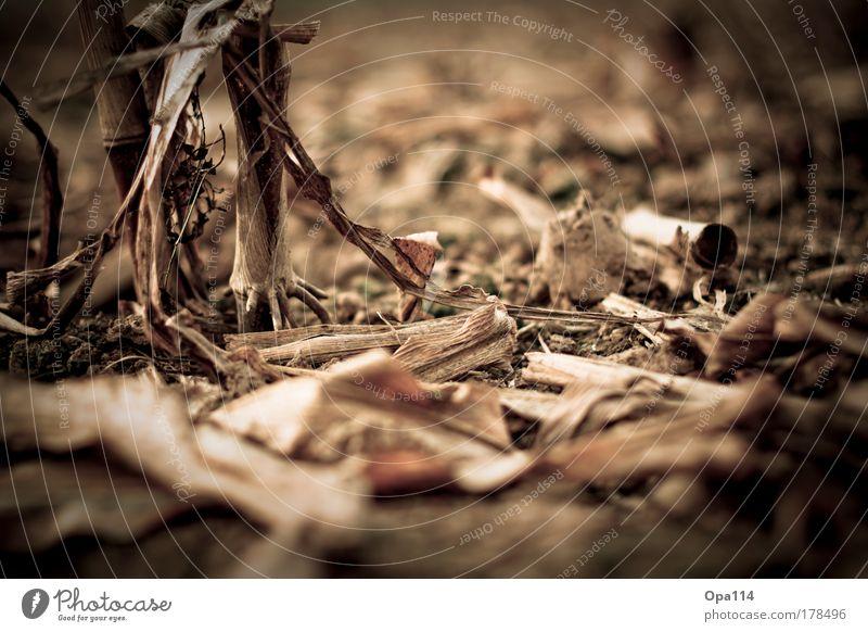 Abgeerntet Natur Pflanze schwarz dunkel Arbeit & Erwerbstätigkeit Herbst grau braun Feld Umwelt Erde fest gruselig bescheiden Tatkraft sparsam