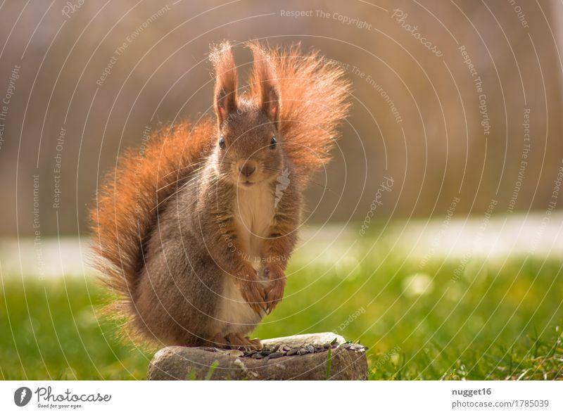 kommt da wer? ;) Natur Tier Sonnenlicht Herbst Gras Garten Wiese Wildtier Tiergesicht Fell Krallen Pfote 1 beobachten Fressen sitzen ästhetisch Freundlichkeit