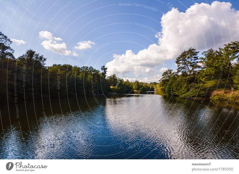 Sommer am See Umwelt Natur Landschaft Pflanze Wasser Himmel Wolken Sonnenlicht Schönes Wetter Wärme Baum Sträucher Gewässer blau grün weiß Farbfoto