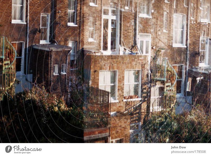 backyard Farbfoto Morgen Morgendämmerung Häusliches Leben Wohnung Sträucher Garten London England Haus Einfamilienhaus Gebäude Architektur Mauer Wand Treppe