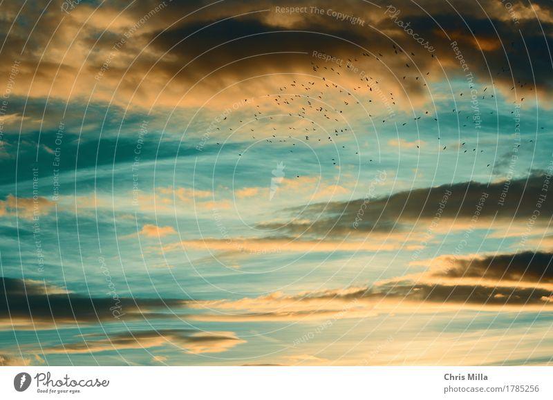 Free Gesundheit Wohlgefühl Zufriedenheit Sinnesorgane ruhig Ferien & Urlaub & Reisen Ausflug Abenteuer Ferne Freiheit Natur Tier Himmel nur Himmel Wolken