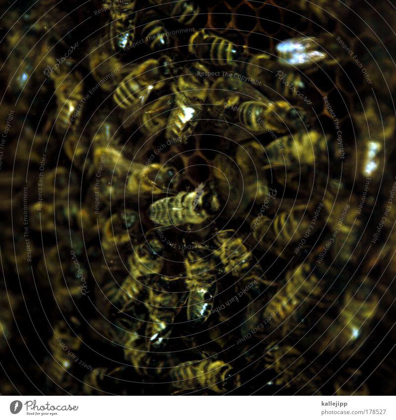 wir sind das volk! Farbfoto Gedeckte Farben Nahaufnahme Detailaufnahme Makroaufnahme Tag Dämmerung Schatten Kontrast Low Key Unschärfe Bildung