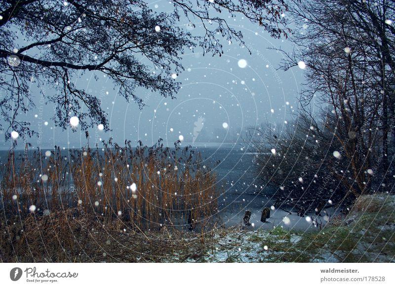 Winter Baum Erholung Landschaft ruhig Schnee Schneefall Eis Seeufer Frieden Schilfrohr Vorfreude Gras friedlich