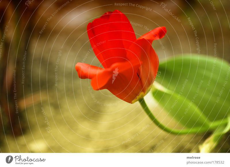 into the sun ... Farbfoto Gedeckte Farben Außenaufnahme Nahaufnahme Menschenleer Sonnenlicht Unschärfe Schwache Tiefenschärfe Pflanze Sommer Schönes Wetter
