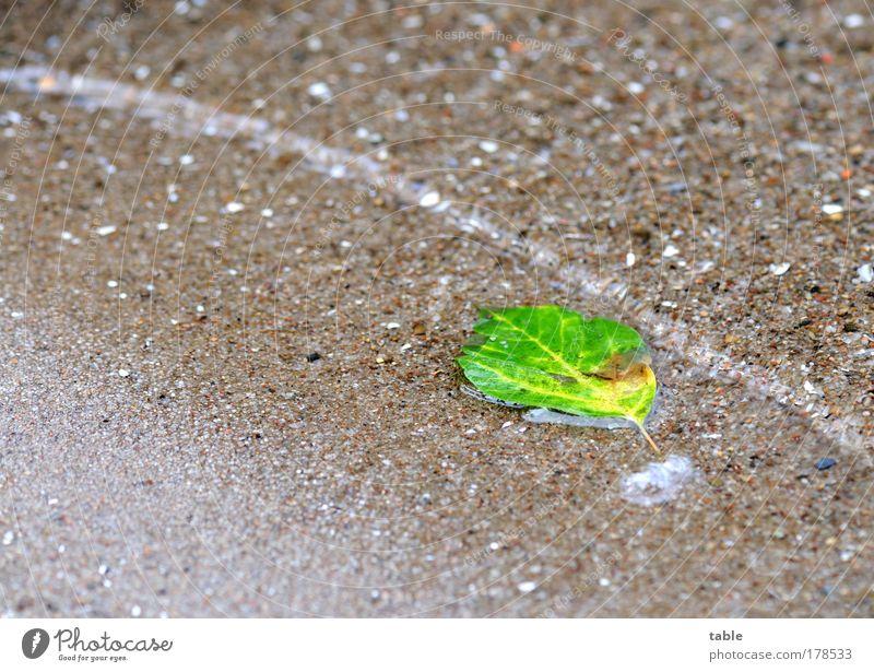 gefährliche Brandung . . . Natur Wasser alt grün Pflanze Sommer Blatt Einsamkeit Erholung Herbst Sand Wellen nass Wandel & Veränderung liegen Sauberkeit