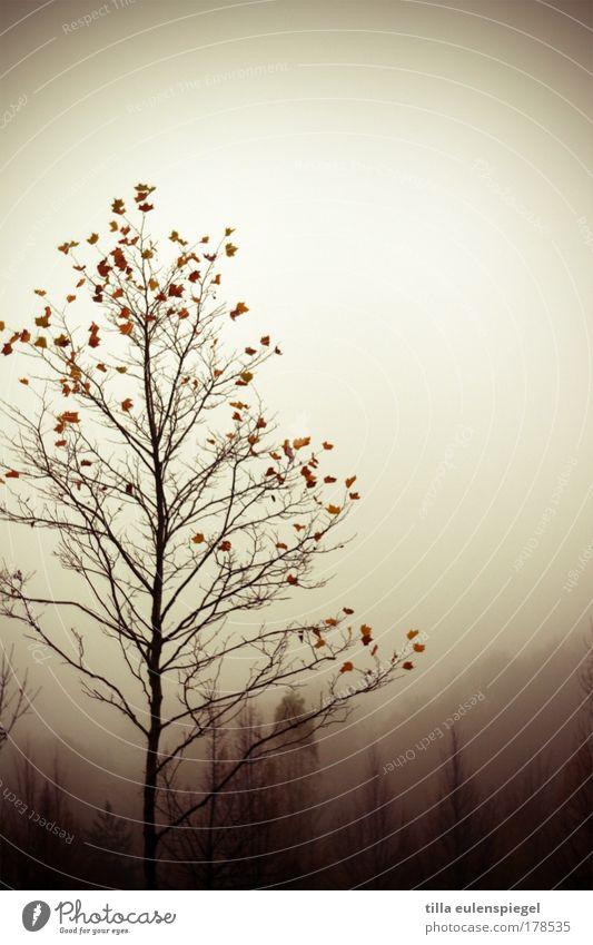 autumn leave Farbfoto Gedeckte Farben Außenaufnahme Experiment Textfreiraum rechts Textfreiraum oben Tag Silhouette Natur Herbst schlechtes Wetter Baum Wald