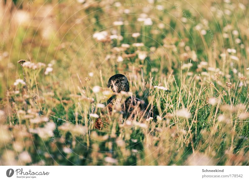 Tarnung ist alles Natur Pflanze Blume ruhig Tier Wiese Umwelt Gras See Park Vogel ästhetisch Wildtier Flügel beobachten Idylle