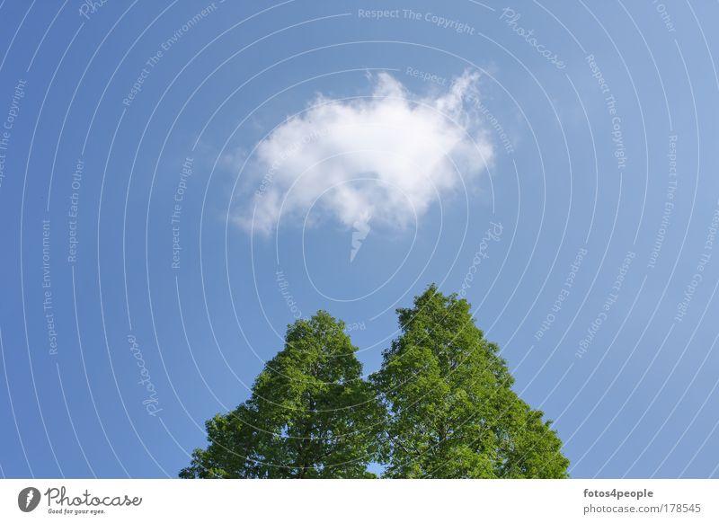 Idee Himmel weiß Baum blau Sommer Wolken Einsamkeit Erholung träumen Denken Luft Perspektive Sauberkeit rein Vergänglichkeit einzigartig