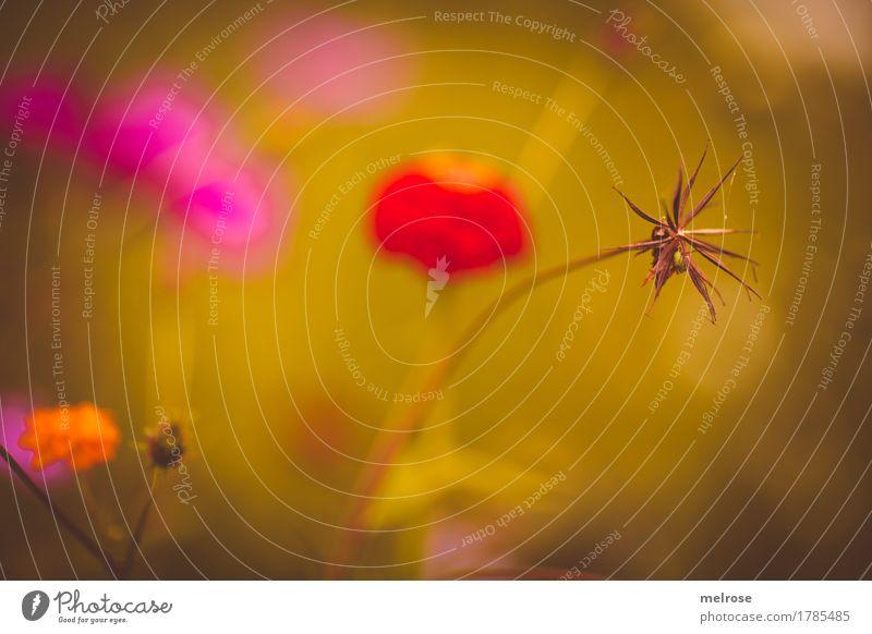 Sommer-Farbtupfer Pflanze Farbe grün schön Blume rot Umwelt Blüte Wiese Gras Stil orange rosa leuchten Park